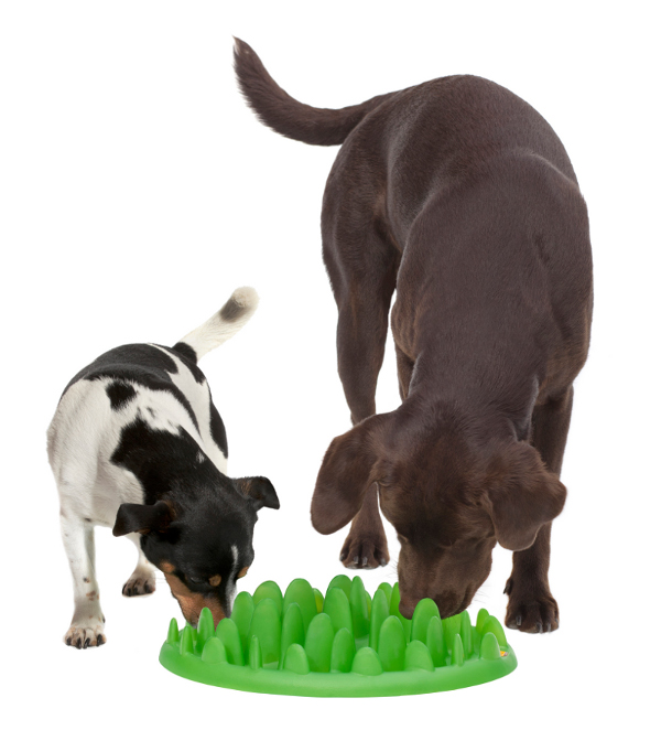English Bulldog feeder with two dogs