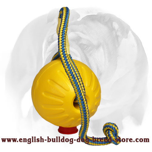 English Bulldog interactive toy for training and playing