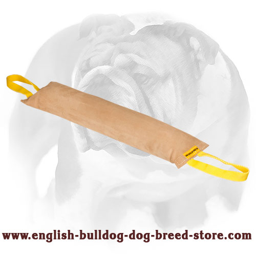 English Bulldog bite tug for obedience and prey drive training