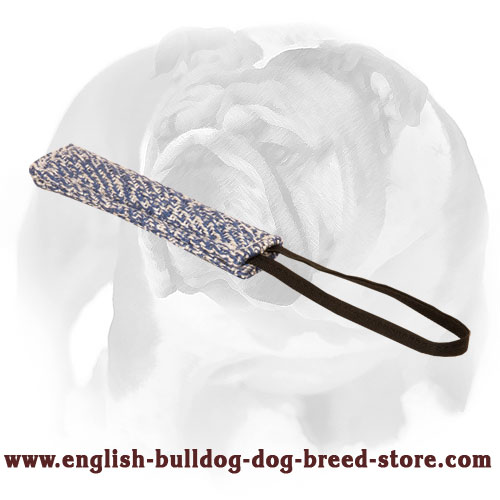 English Bulldog narrow puppy tug for bite training