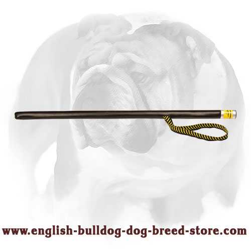 Leather covered agitation stick for training English Bulldog