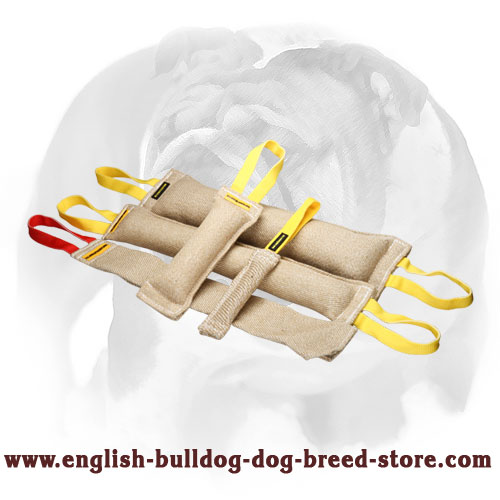 Professional set of tugs for training English Bulldog