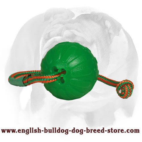 English Bulldog safe rubber toy for training and playing