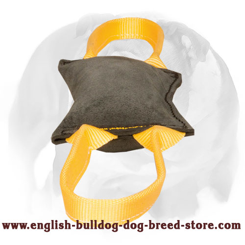Leather bite tug for training English Bulldog experienced puppies
