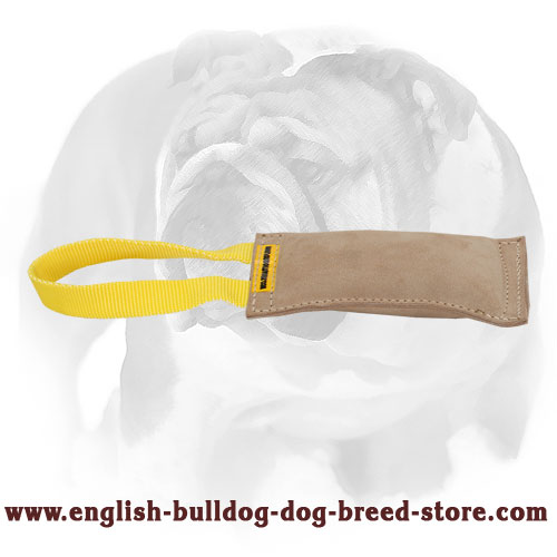 Leather bite tug with handle for training English Bulldog puppies and young dogs