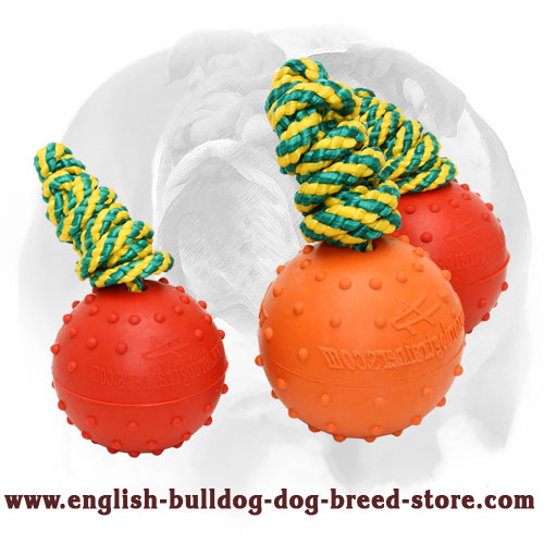 English Bulldog dotted water rubber ball for massaging gums and cleaning teeth