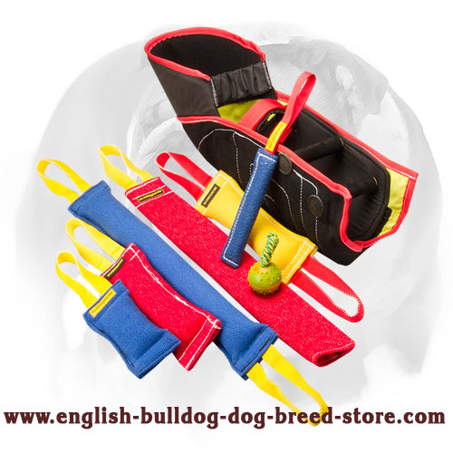 French linen set for training English Bulldog puppies