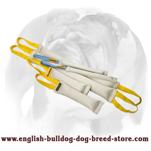 Fire hose set of bite tugs with handles for training English Bulldog