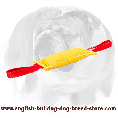 English Bulldog French linen puppy tug for bite training