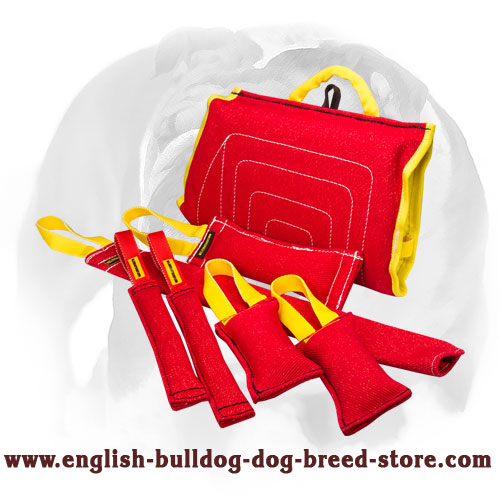 French linen set of tugs for training English Bulldog puppies