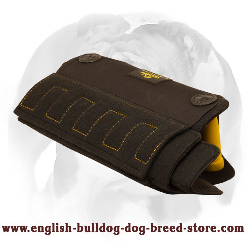 English Bulldog adjustable bite builder