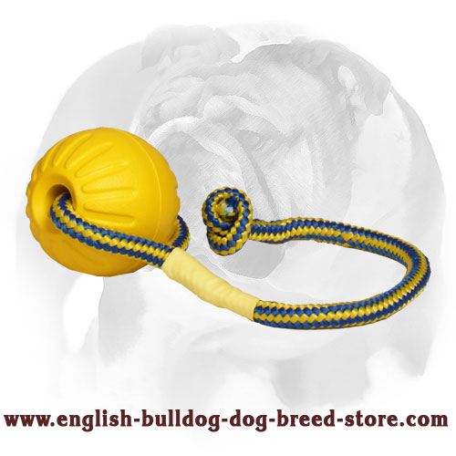 English Bulldog toy for training and playing