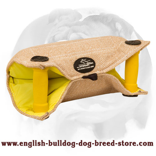 English Bulldog reliable puppy bite builder