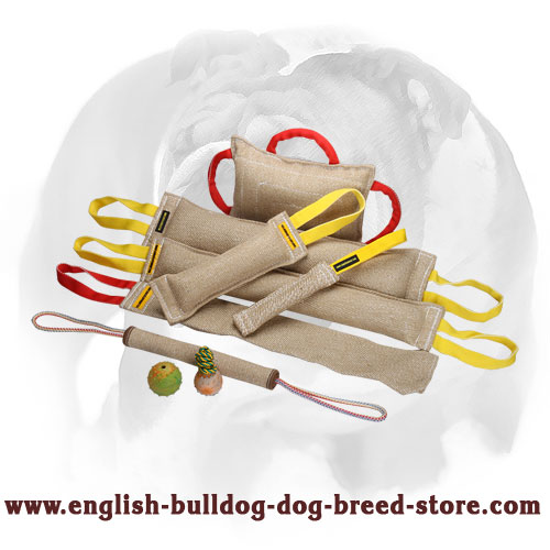Strong bite tugs with handles for training English Bulldog