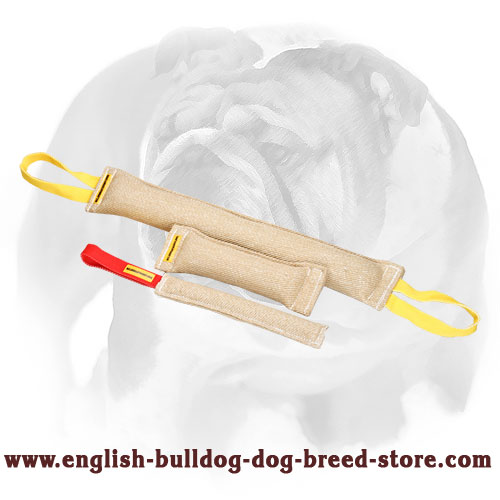 Durable set of tugs for training English Bulldog