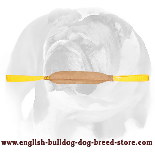 Durable tug for bite training English Bulldog