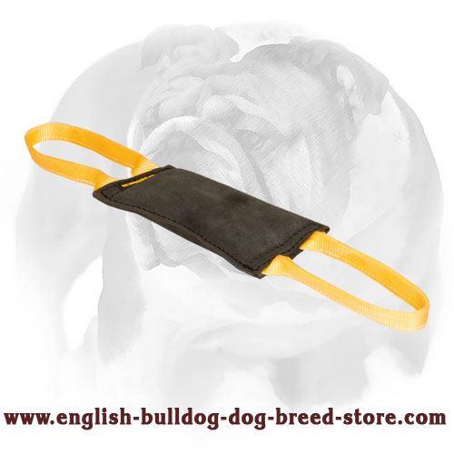 English Bulldog strong leather tug with nylon handles for training puppies and young dogs