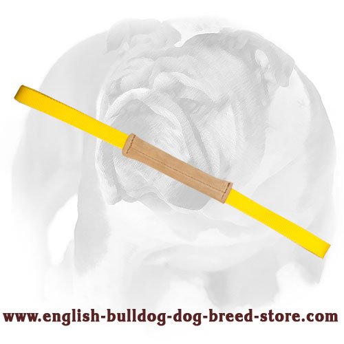 English Bulldog puppy bite tug with loop-like handles for training and playing