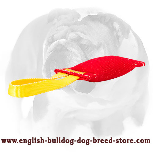 Nylon handle on the bite tug made of French linen for training English Bulldog puppies