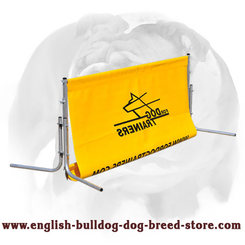 Jump for English Bulldog Field Training