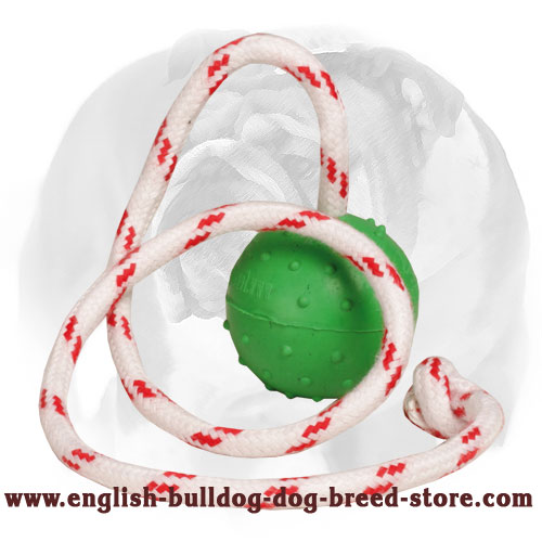 English Bulldog water ball with dots for training and playing