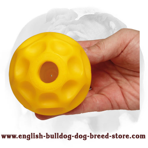 Interactive ball for English Bulldog mental and physical stimulation