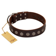 """Starry-Eyed"" Best Quality FDT Artisan Brown Designer Leather English Bulldog Collar with Small Plates"