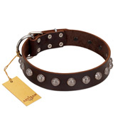 """Lucky Silver"" Designer Handmade FDT Artisan Brown Leather English Bulldog Collar"