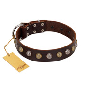 """Gape Buster"" FDT Artisan Brown Leather English Bulldog Collar with One Row of Studs"