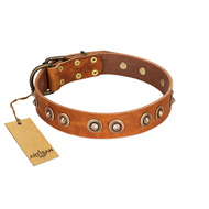 """Precious Relic"" FDT Artisan Tan Leather English Bulldog Collar Adorned with Old Bronze Look Studs"