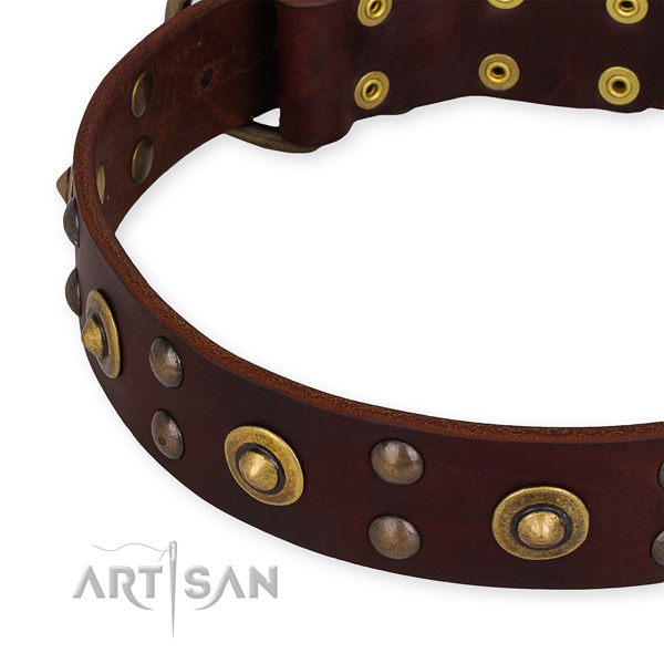 Leather collar with strong hardware for your beautiful canine