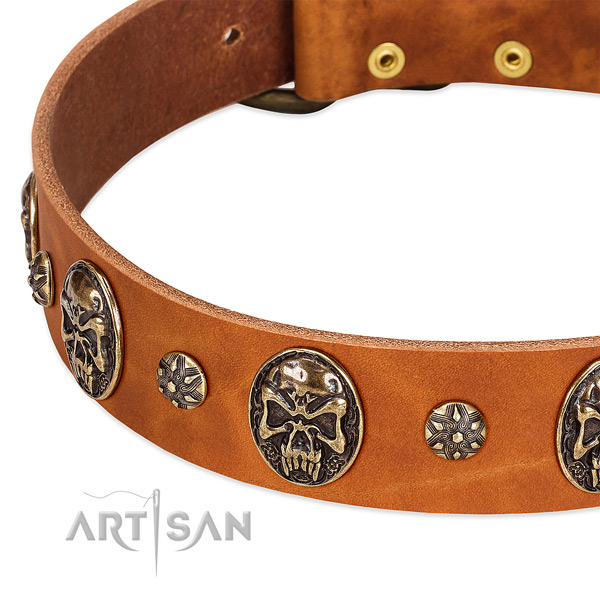 Reliable adornments on full grain genuine leather dog collar for your doggie