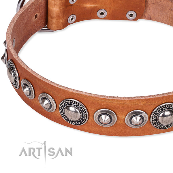 Basic training embellished dog collar of reliable full grain natural leather