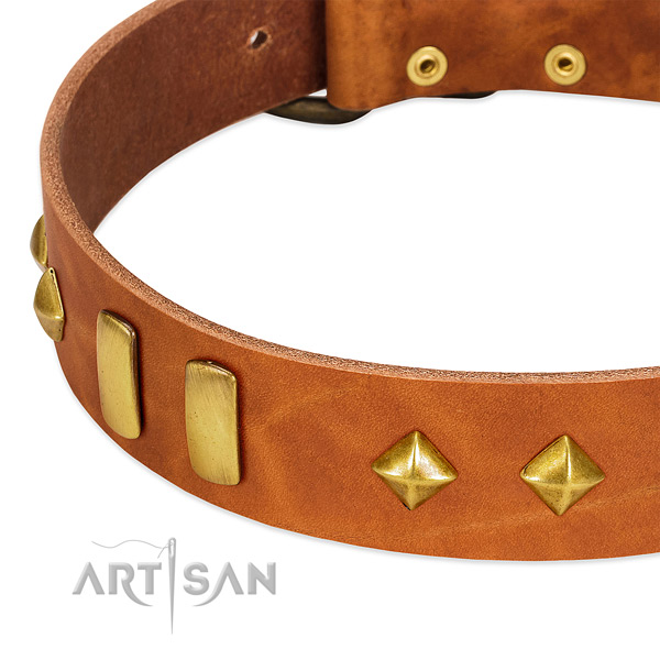 Daily use natural leather dog collar with designer adornments
