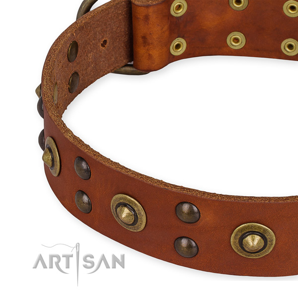 Leather collar with durable fittings for your beautiful canine