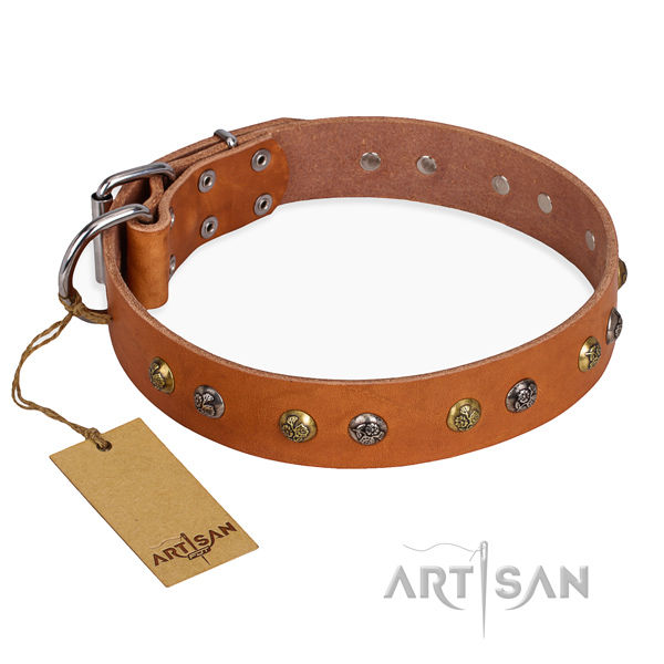 Fancy walking perfect fit dog collar with corrosion proof hardware