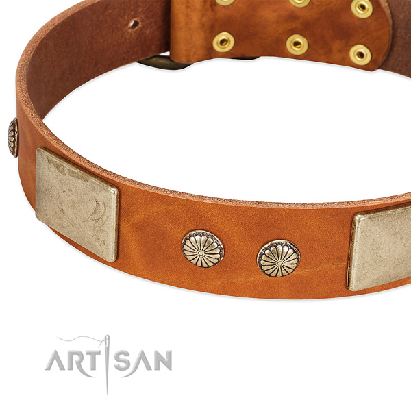 Corrosion resistant adornments on full grain leather dog collar for your four-legged friend