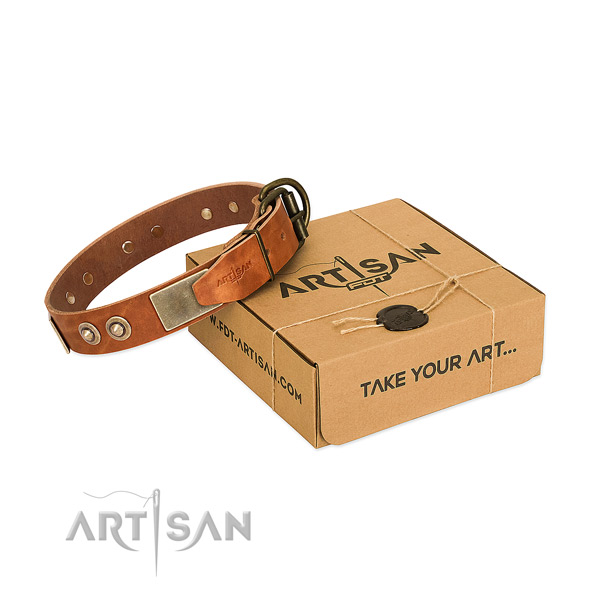 Rust resistant studs on dog collar for stylish walking