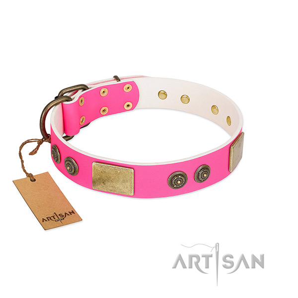 Significant leather dog collar for everyday use