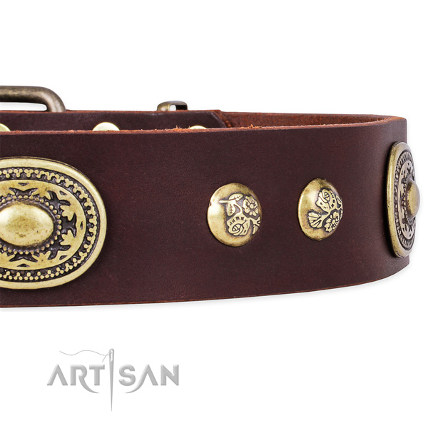 Adorned genuine leather collar for your impressive canine