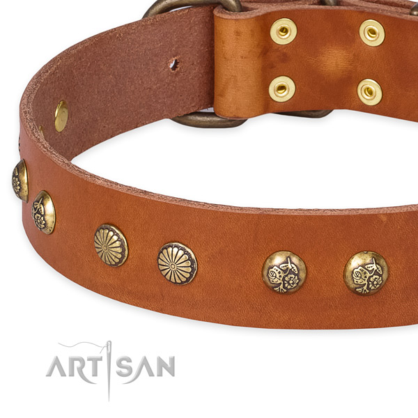 Full grain leather collar with corrosion proof buckle for your stylish four-legged friend