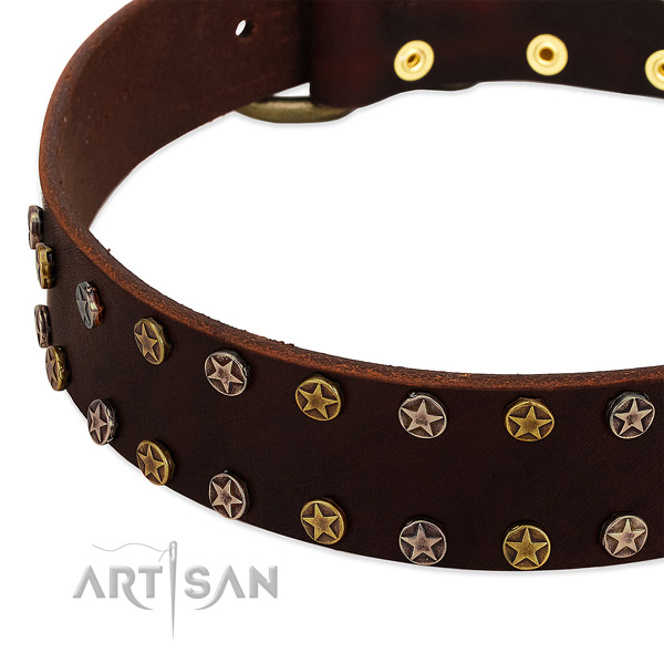 Stylish walking full grain leather dog collar with incredible embellishments