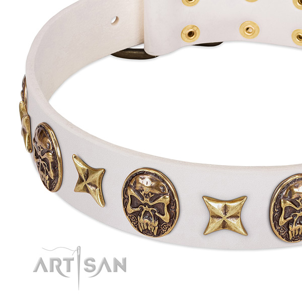 Incredible dog collar made for your impressive canine
