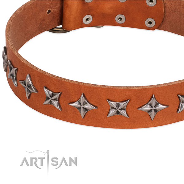 Everyday walking studded dog collar of finest quality genuine leather