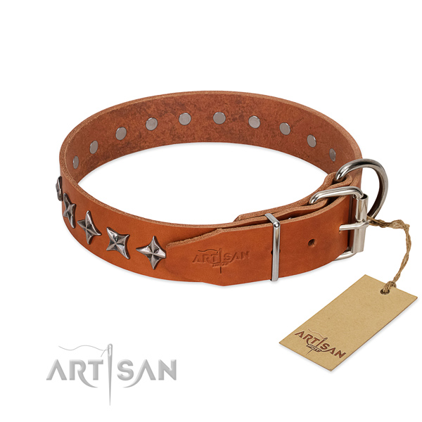 Daily walking studded dog collar of strong full grain leather