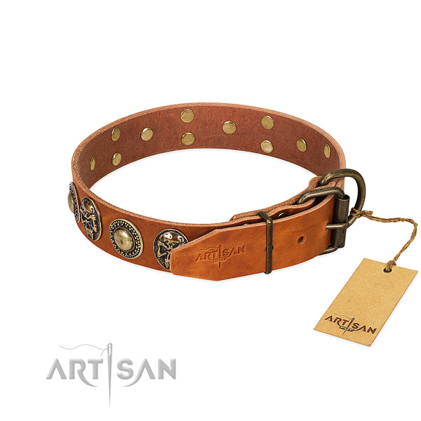 Durable studs on walking dog collar