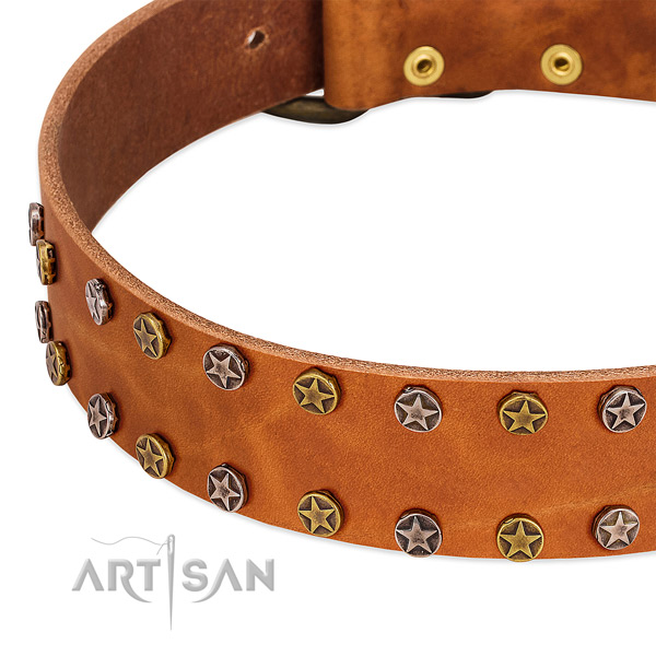 Everyday use full grain genuine leather dog collar with impressive adornments