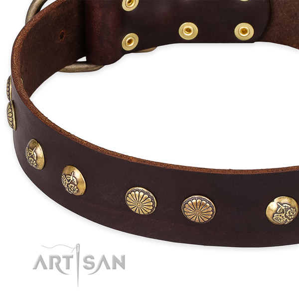 Full grain leather collar with corrosion proof fittings for your attractive canine