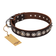 """Step and Sparkle"" FDT Artisan Glamorous Studded Brown Leather English Bulldog Collar"