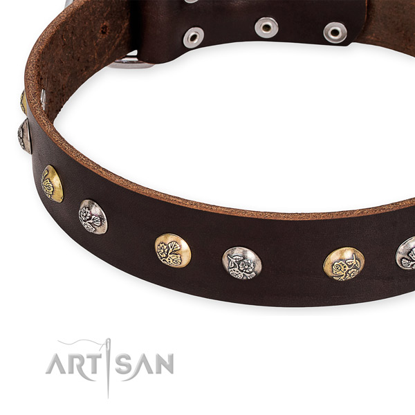 Genuine leather dog collar with significant rust-proof studs